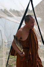 With money, corruption and drugs, this monk fears Buddhism in Thailand is a 'poisoned fruit'