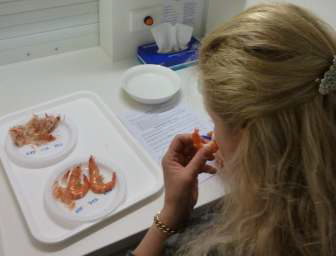 Testing taste quality of a prawn