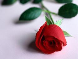 Заказать доставку цветов в нужный город