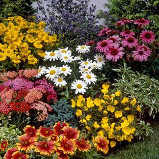 Perennials by Size