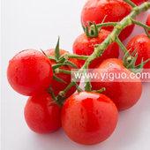 临沂串串小番茄400g