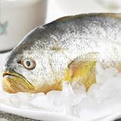 东海生态大黄鱼(400-500g/条)