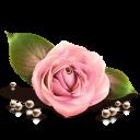 flower دلاویزترین شعر جهان