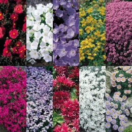 Ground Cover Perennial Collection