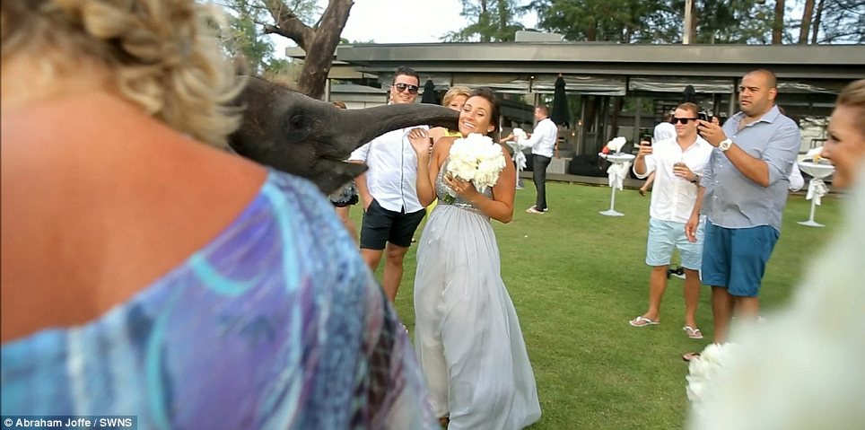 Shock: An Australian woman getting married in Thailand ended up getting too close for comfort to a watching elephant