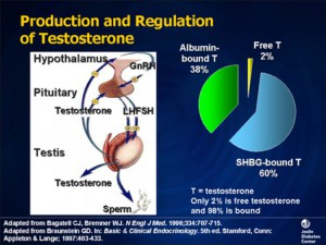 Testosterone production