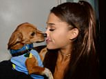 Mandatory Credit: Photo by Startraks Photo/REX (4568947h)  Ariana Grande with Rescue dog  Ariana Grande at a dog shelter, New York, America - 19 Mar 2015  Ariana Grande Teams With BarkBox To Find Homes For Rescue Pups During Her Msg Shows