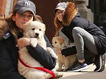 EXCLUSIVE: Girls star Allison Williams daughter of Brian Williams spotted walking her newly adopted puppy Moxie today in nyc.   Pictured: Allison Williams Ref: SPL979072  240315   EXCLUSIVE Picture by: Abbot-Turgeon / Splash News  Splash News and Pictures Los Angeles: 310-821-2666 New York: 212-619-2666 London: 870-934-2666 photodesk@splashnews.com