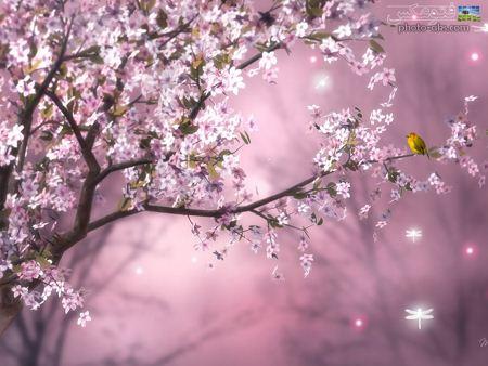 طبیعت گل های بهاری صورتی pink spring flowers
