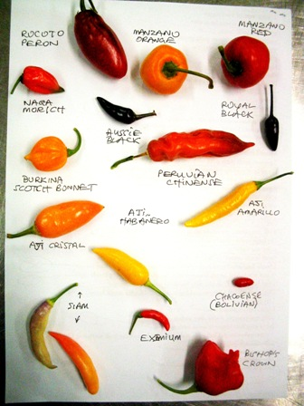 chili collection #1:
