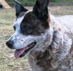 Kurma the dog: