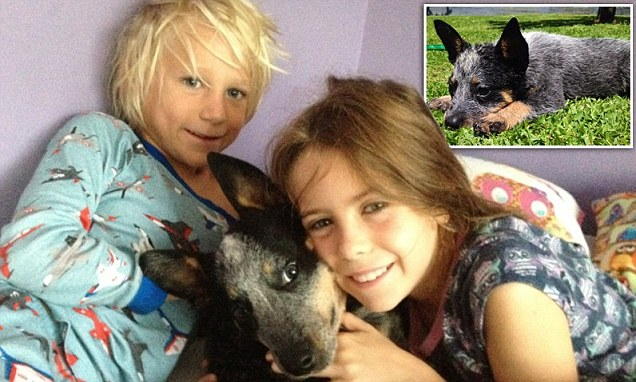 'Aussie's our hero... He saved their lives': The brave puppy who sacrificed his life to