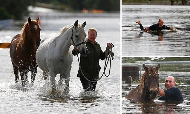 Owner of five horses stranded in floods reveals how her surfer brother-in-law spent SIX