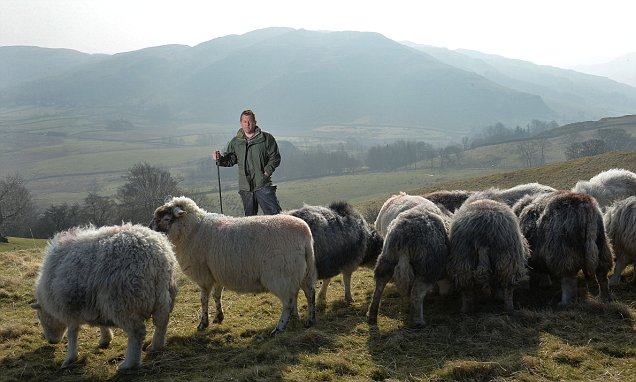 The Sheperds life Oxford student who didnt follow the flock and says breeding rams is more