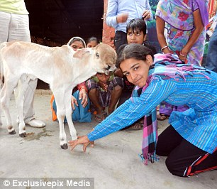 Worshipped: Hindus revere cows as a symbol of life