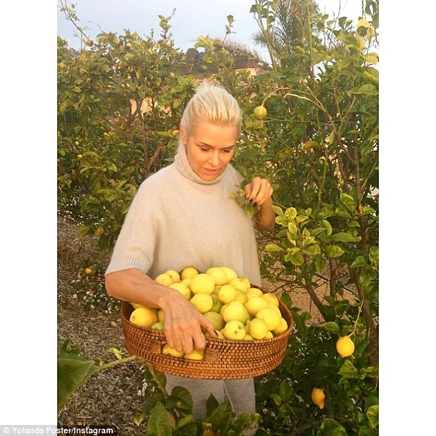 Lemon-aid: Yolanda Foster, 51, who has recently been diagnosed with lyme disease, shared a photo in dusky sunlight picking lemons for Earth Day