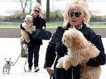 New York, NY - Aussie actress, director and producer, and also Hugh Jackman's wife Deborra-Lee Furness, returns home with her pups Dali and Allegra.\nAKM-GSI          April 23, 2015\nTo License These Photos, Please Contact :\nSteve Ginsburg\n(310) 505-8447\n(323) 423-9397\nsteve@akmgsi.com\nsales@akmgsi.com\nor\nMaria Buda\n(917) 242-1505\nmbuda@akmgsi.com\nginsburgspalyinc@gmail.com