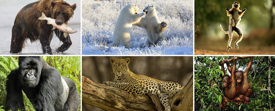 Natural World Safaris new trip visits the world's  most endangered animals