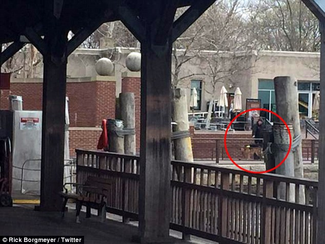 Sniffing out trouble: Twitter user Rick Borgmeyer uploaded this photograph of an officer patrolling Liberty Island with a dog