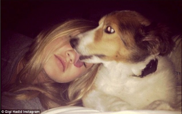 'I wish I could be there to remind him how much I love him': Gigi was missing family dog Lucky