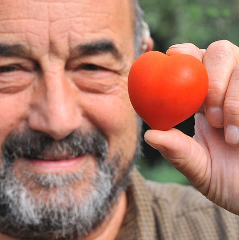 He must really love tomatoes! Gardener grows heart-shaped fruit in his greenhouse