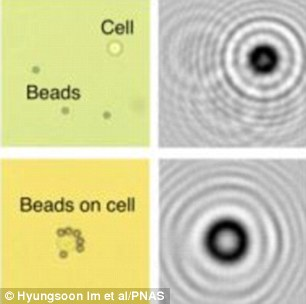 The images above show how the diffraction patterns created by beads and cells change when the beads clump around a cell, highlighting cancerous cells (bottom) compared to a healthy cell (top)