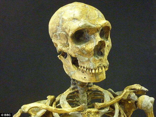 New archaeological discoveries are expanding our knowledge of how Neanderthals lived in ways that could not have been imagined when their fossilised remains, like the skeleton above, were first found by archaeologists