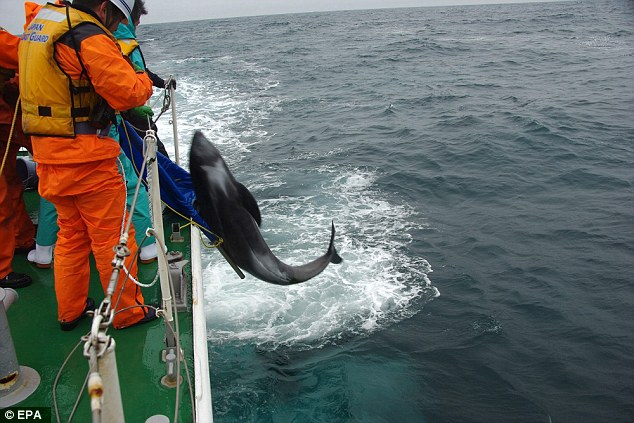 Japan Coast Guard personnel managed to return some of the whales back to the sea
