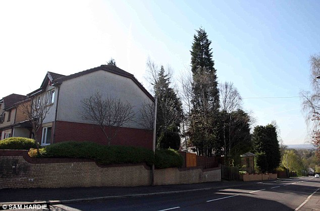 Long-suffering neighbours claim that the massive leylandii trees block the light from their homes