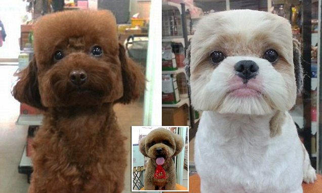 The shape of things to come for dog grooming: Pets have their fur trimmed to make their