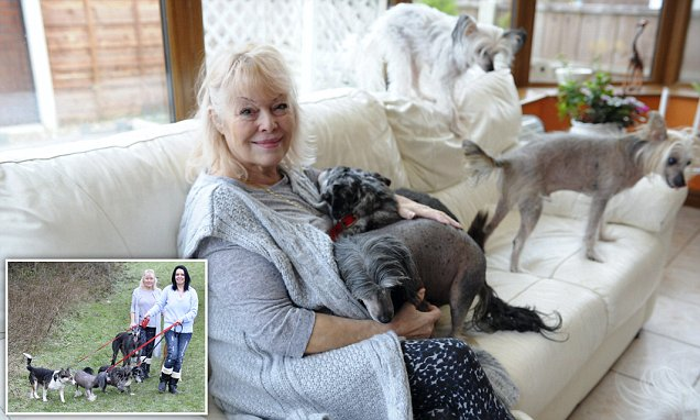 Fairy Dogmother spends £28,000 a year looking after stray dogs in Bolton