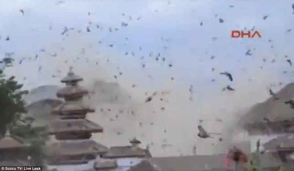 Caught on video: Hundreds of birds fill the sky above Kathmandu as a massive earthquake hits the Napalese capital in a disaster that has killedmore than 3,600 people across the region