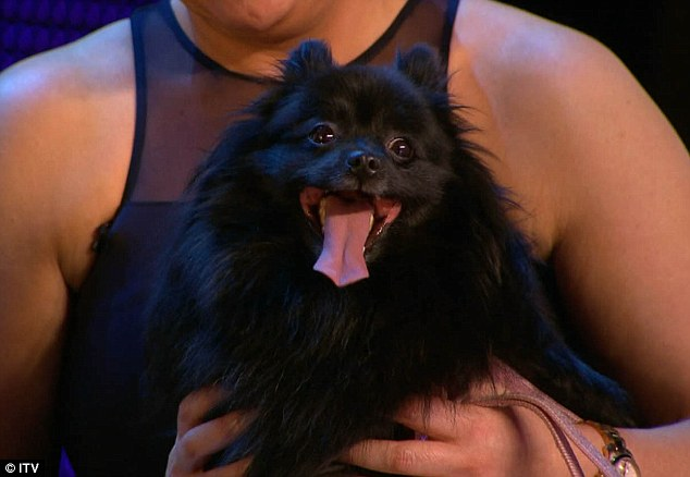 Who let the dogs out: The adorable German Spitz won over the judges and the audience alike
