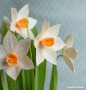 Daffodil paper flower
