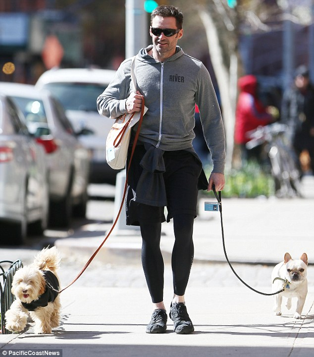 Dog lover: Hugh Jackman was seen with a grin on his face while walking dogs Dali and Allegra in his neighborhood of New York City on Saturday