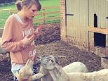 Taylor swift feeds the goats
