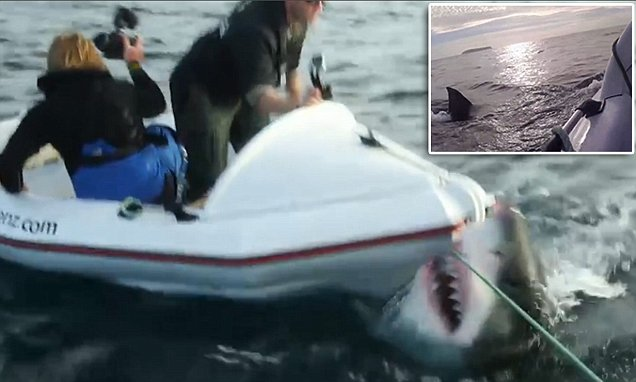 Lair of the Megashark crew attacked by HUGE great white during filming
