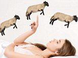 sheep sleep.jpg