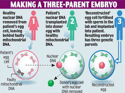 Three Parent Babies – three-parent in vitro fertilisation (IVF)