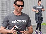 """EXCLUSIVE TO INF...June 9, 2015: Hugh Jackman goes for an early morning run in New York City wearing a """"#DOGPOUND"""" t-shirt...Mandatory Credit: Ordonez/papjuice/INFphoto.com Ref: infusny-160/286"""
