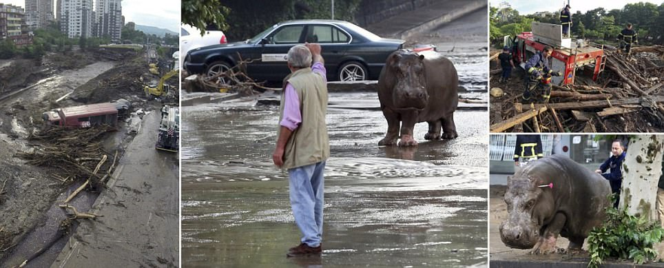 Apocalyptic scenes in Georgia's Tbilisi as animals escape from zoo during freak flood