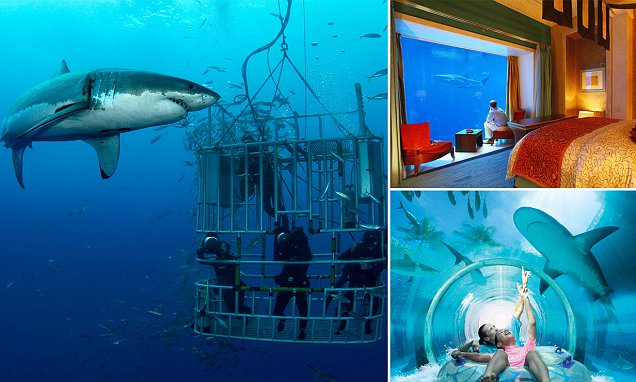 As Jaws celebrates its 40th anniversary, the best places to see sharks revealed