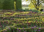 The gardens at Broughton Grange, Oxfordshire. Designer Tom Stuart-Smith