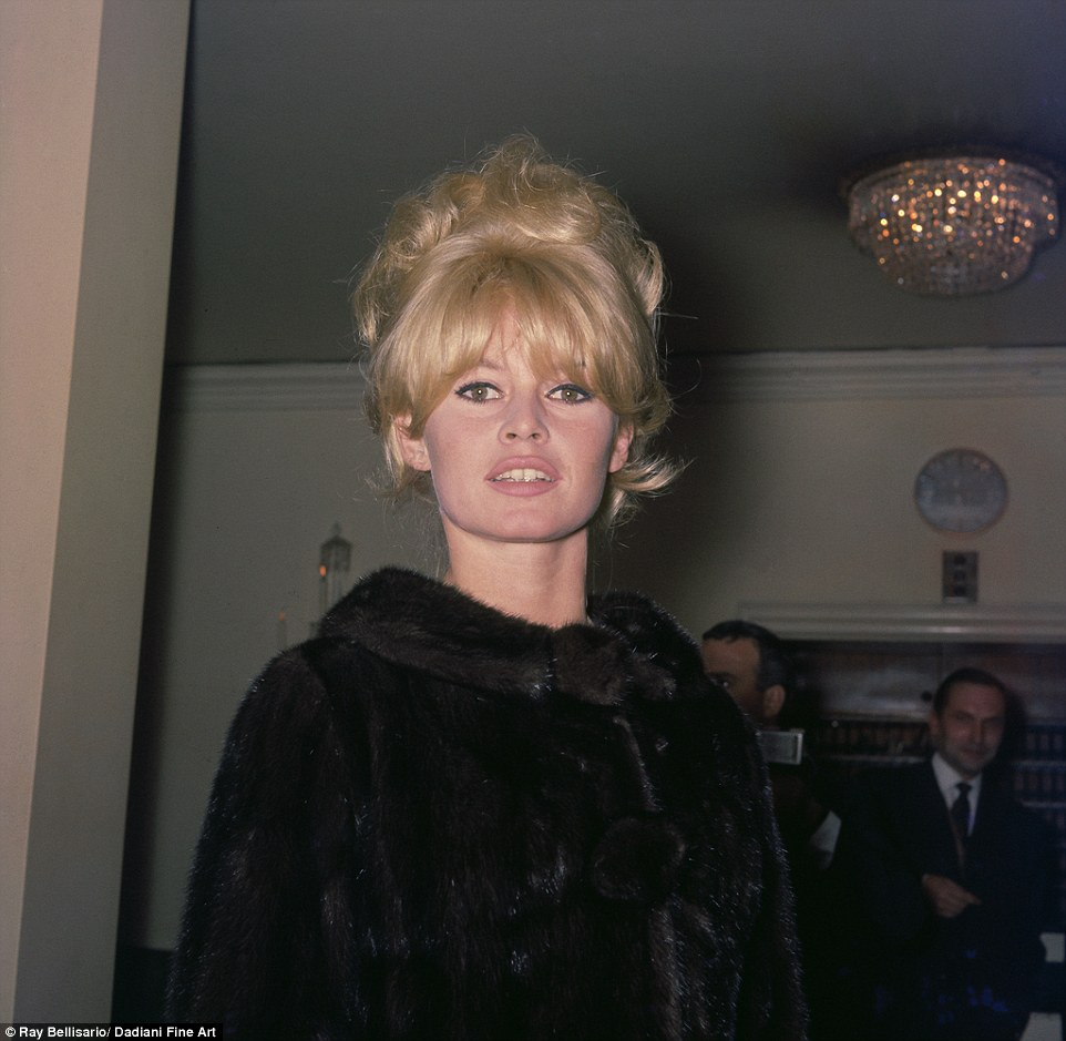 Outfit change: Here dressed in dark fur coat and donning a classic up-do, Bardot stares into the camera as the photographer captures the moment