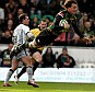 Flying high: Northampton's Lee Dickson gets airborne to score the first try