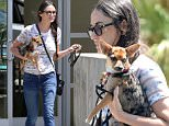 EXCLUSIVE: Demi Moore leaves a veterinarian's office after a check up for her puppy.\n\nPictured: Demi Moore\nRef: SPL1061326  260615   EXCLUSIVE\nPicture by: MRM / Splash News\n\nSplash News and Pictures\nLos Angeles: 310-821-2666\nNew York: 212-619-2666\nLondon: 870-934-2666\nphotodesk@splashnews.com\n