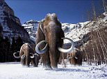 A group of woolly mammoths, the huge Ice Age mammals that lived and roamed the frigid tundra steppes of northern Asia, Europe and North America, are seen in this undated illustration provided courtesy of Giant Screen Films.   An exhaustive genetic analysis of these bygone Ice Age giants and their living cousins, Asian and African elephants, has revealed a series of genetic adaptations that enabled woolly mammoths to thrive for eons in such adverse circumstances. To match story SCIENCE-MAMMOTHS/     REUTERS/Courtesy of Giant Screen Films, copyright 2012 D3D Ice Age, LLC/Handout via Reuters ATTENTION EDITORS - THIS IMAGE HAS BEEN SUPPLIED BY A THIRD PARTY. IT IS DISTRIBUTED, EXACTLY AS RECEIVED BY REUTERS, AS A SERVICE TO CLIENTS. FOR EDITORIAL USE ONLY. NOT FOR SALE FOR MARKETING OR ADVERTISING CAMPAIGNS. NO SALES. NO ARCHIVES. NO COMMERCIAL USE.