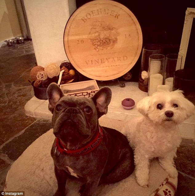New family member: Eva has recently purchased her french bulldog, Jinxy, to keep her terrier company