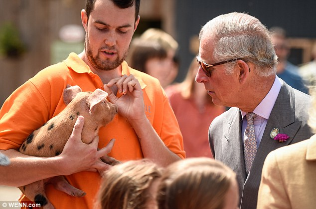 The heir to the throne appeared fascinated with the adorable hog as she spoke to a farm worker, who was wearing a bright orange shirt
