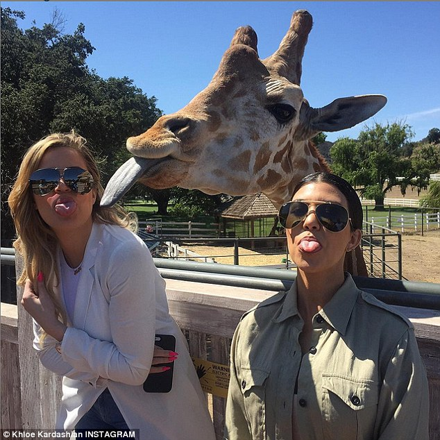 'Say cheese': Khloe and Kourtney Kardashian were upstaged by a giraffe as all three stuck their tongues out in a hilarious selfie both sisters posted on Instagram on Friday